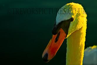 Photo: QUACK