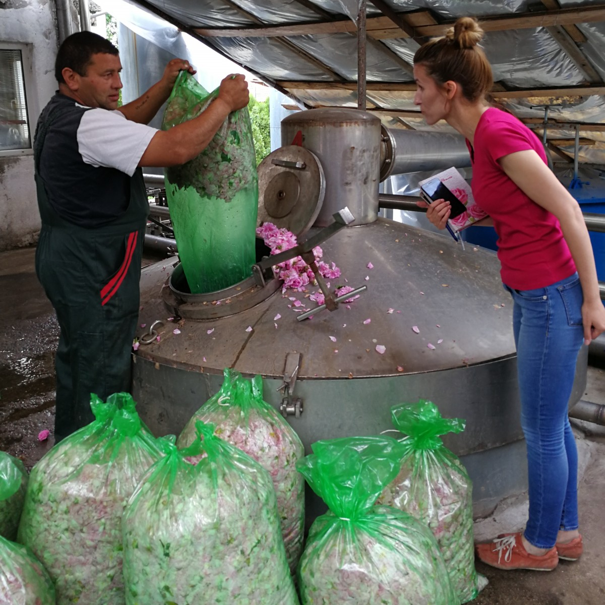 3500kg的花瓣提煉出 1kg的玫瑰精油