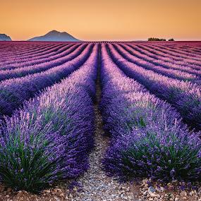 Valensole Plateau by David Long - Landscapes Prairies, Meadows & Fields ( provence, lavender, valensole,  )