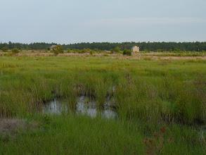 Photo: Wetlands habitat at Franklin Parker Preserve