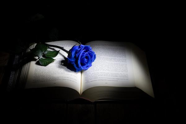 Una rosa blu di Concetta Caracciolo