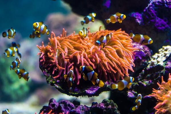 Tanti Nemo.... di Pi_M_Pi