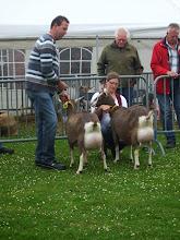 Photo: Klasse 5: 2 jarige toggenburger geiten.  1a. Renske's Fabiola'JH'; 1b. Renske's Frederika 'JH'.