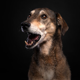 Skippy by Peter Driessel - Animals - Dogs Portraits
