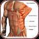 Download Musculos del Abdomen - Anatomía y Ejercicios For PC Windows and Mac