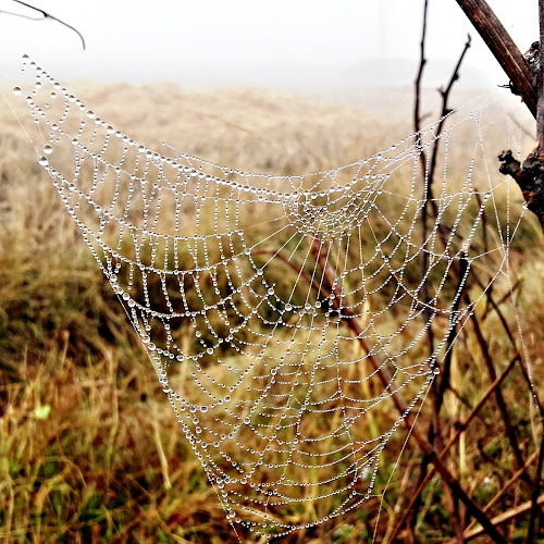 spider web by Arubam Meitei - Nature Up Close Other Natural Objects ( #nature, #spiderweb )