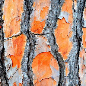 Tree by Rita Uriel - Nature Up Close Trees & Bushes ( orange, trunk, tree, texure, wrinkled )