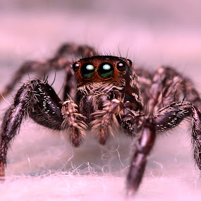 by Pinang Mawong - Animals Insects & Spiders