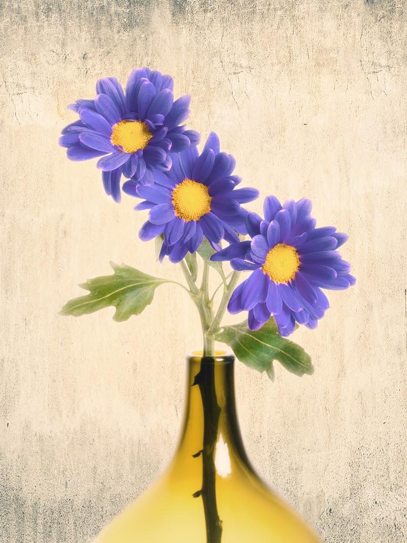 Quel mazzolin di fiori di Sergio Rapagnà