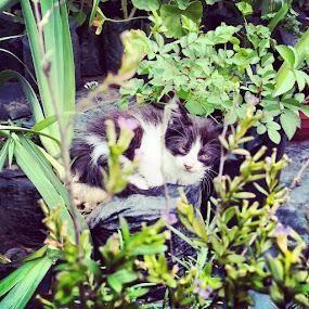 Sleepy by Gianna Baker - Animals - Cats Kittens ( kitten, cat, black and white, cute, close up )