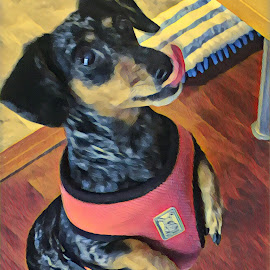 TREAT TIME by Roxanne Dean - Abstract Patterns ( face, standing up, tongue, begging, dog,  )
