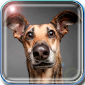 Your Animals Translator icon