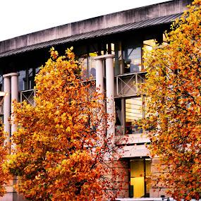 Autumn Scene by Amy-louise Maszuchin - Nature Up Close Trees & Bushes ( season, nature, autumn, trees )