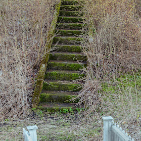 Stairway between bushes by Benny Høynes - Nature Up Close Trees & Bushes ( stairway, grass, bushes, green, spring, norway )