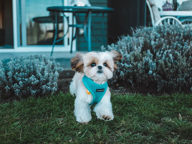 How to  adopt a dog  without  feeling  buyer's  remorse