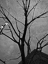 Photo: Low Key Tree