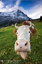 Photo: Kisses from Switzerland