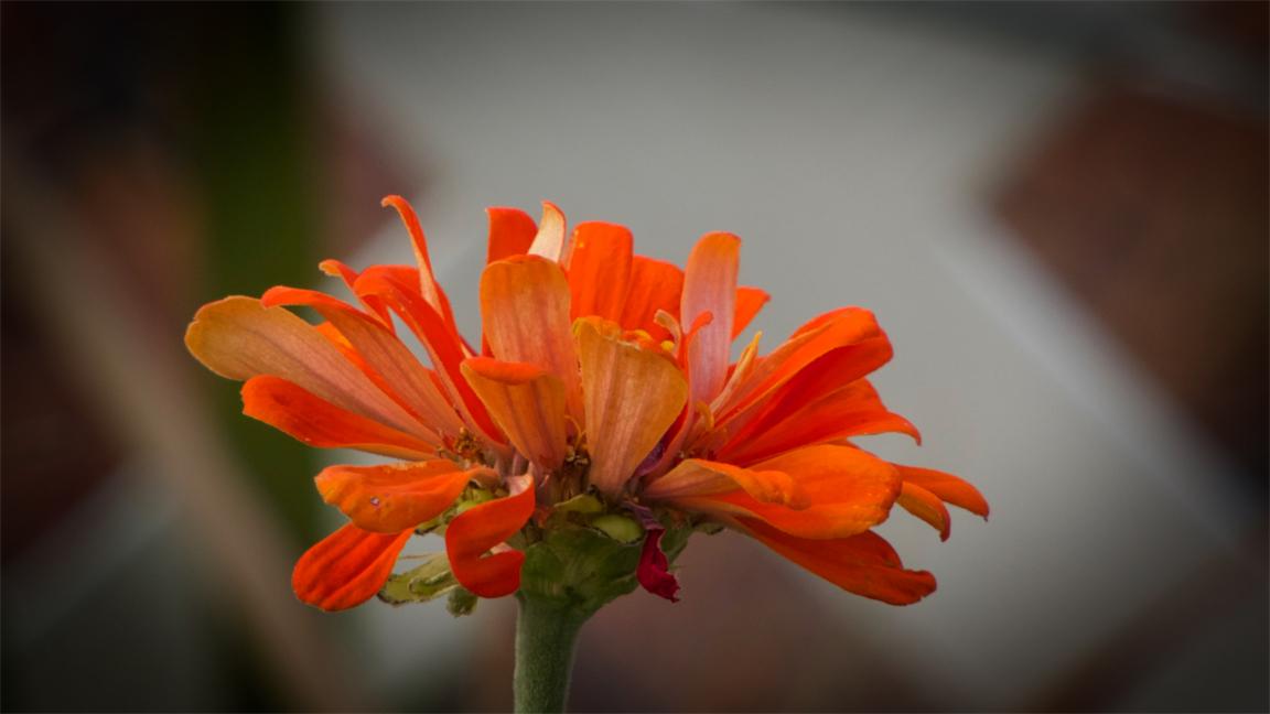 Orange Zin.jpg