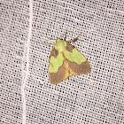 smaller parasa moth