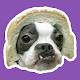 Memes Graciosos de Perros Download for PC Windows 10/8/7