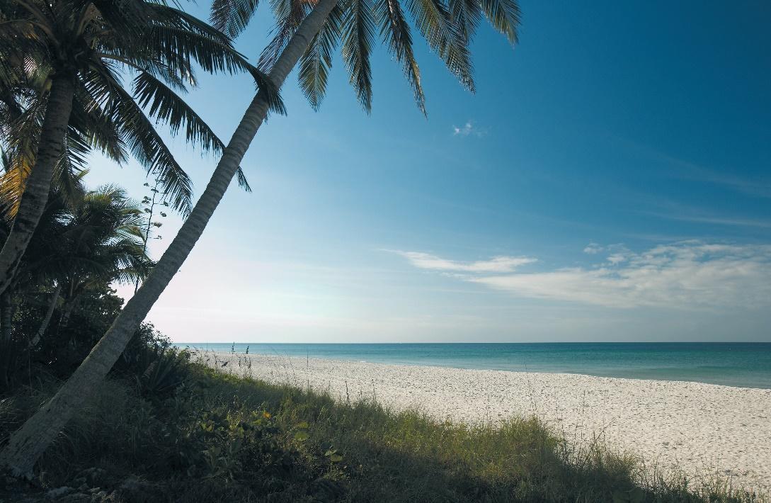 Naples Beach Palm Tree_cmyk_l.jpg