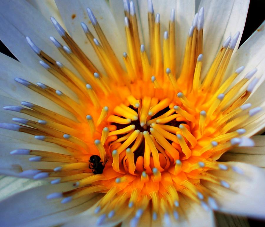 by Dee Donald - Flowers Single Flower