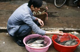 Photo: 04506 広州市/清平自由市場/魚