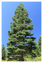 Photo: Eastern Sierras-20120716-408