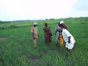 Photo: Visite CA CCRB (Rice Growers Association) sur le site SRI de DOGBA 2012, [photo provided by Pascal Gbenou]
