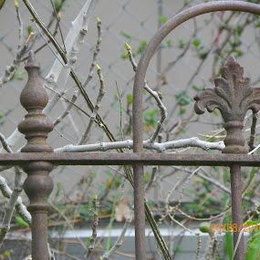 by Kim Pauly - Novices Only Objects & Still Life ( #wrought iron, #still life, #gate, #novice, # garden,  )