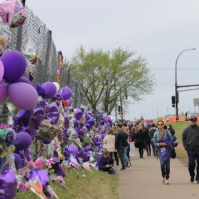 Wall Of Purple by Scott Valenzuela - City,  Street & Park  Historic Districts ( minnesota, memorial, purple, prince, artist )