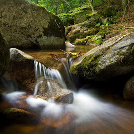 by Siniša Almaši - Nature Up Close Water ( water, up close, stream, nature, cascade, forest, view, shade, stones, light, rocks, river )