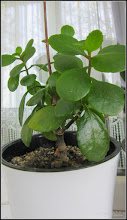 "Photo: Din balconul meu, planta neideintificata - ""adoptata""  - 2017.04.06"