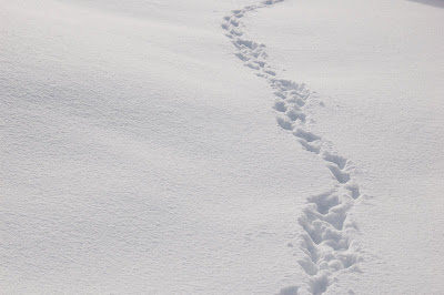 Tracks in fresh snow.