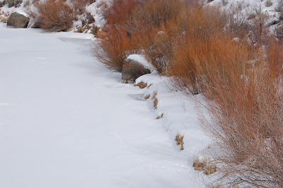 Red willow stems contrast against snowy river bank.