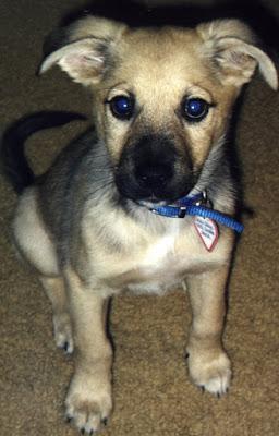 Cute mixed breed puppy looks like he's wearing eyeliner.Photo by Lisa Callagher Onizuka