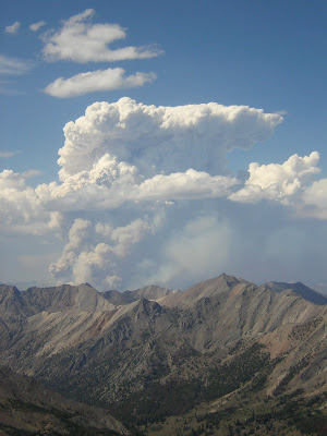 Forest fire smoke column grows into towering cumulus cloud.