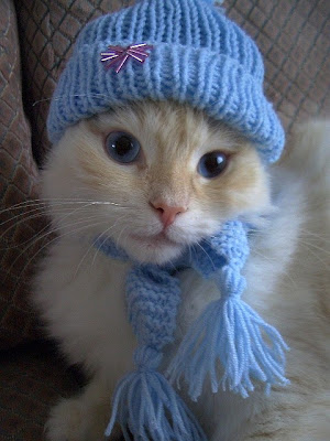 Darling kitten dolled up in her blue hat and scarf. Photo by flickr user mojemi-Monique