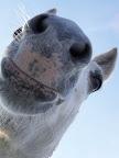 Soft, velvety horse nose.