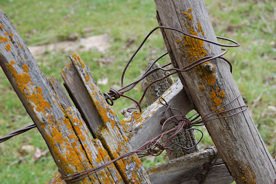 Old wire entwined, lichen encrusted fence in Riggins, Idaho