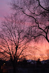 Bare trees silhouette against salmon and magenta sunrise. Photo by Raymond Chambers