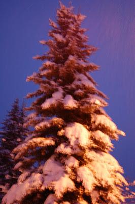 Majestic fir tree flocked in white