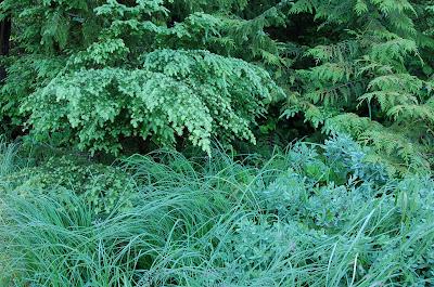 Freshly dewed grasses, huckleberry brush, hemlock and cedar. Deer Mountain, near Ketchikan, Alaska.