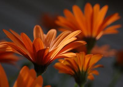 Orange flowers in the sun.
