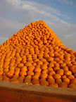 Happy Halloween! Pumpkin pyramid pile in Gilroy, CA.