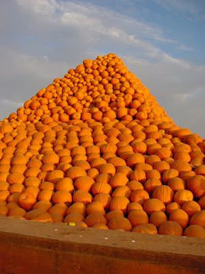Happy Halloween! Pumpkin pyramid pile in Gilroy, CA.