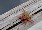 Tiny plant finds a spot to grow on dock in Ketchikan, Alaska.