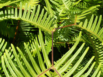 Fern frond patterns.