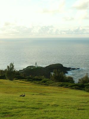 Pair of geese & lighthouse. Kawai, Hawaii.