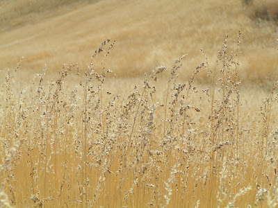 Field grasses in fall.